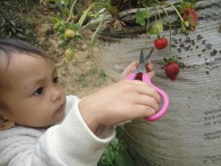 Naia Metik Strawberry